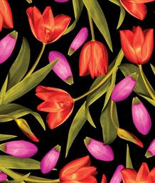 Tulips, Red/Pink
