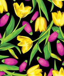 Tulips, Yellow/Pink